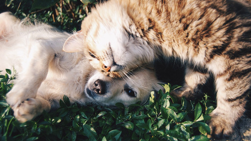 Take Care of Your Furry Friend with Helpful Apps for Pets
